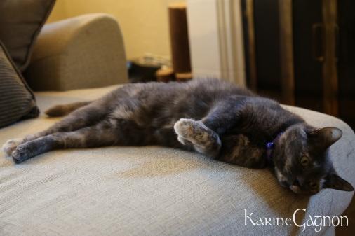 My cat Quinn lounging around-Ma chatte Quinn en mode détente