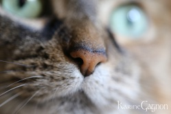My cat Magique up close and personal-Ma chatte Magique qui partage sa bulle