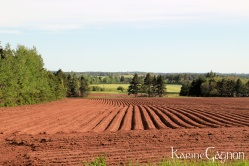 A freshly tilled potato field in Indian River