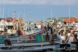 Fishing boats in Malpeque Harbor