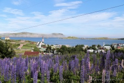 The town of Trinity seen from a field of lupins.
