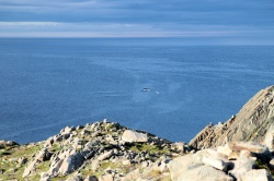 A whale off the coast in Bonavista