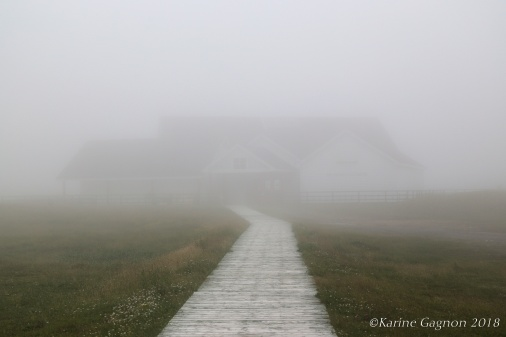 Foggy view of the interpretation center at Cape St. Mary's Ecological Reserve