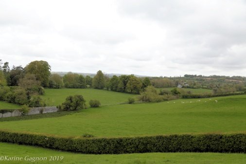 A herd of sheep seen grazing in the distance at Newgrange